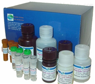 人脑红蛋白(NGB)ELISA试剂盒,48T/96T