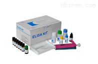 猪可溶性E选择素检测试剂盒