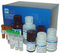 鸡白介素1β检测试剂盒