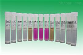 HFL-I:人胚肺成纤维细胞