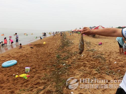通海污水处理厂污水直排 江苏北戴河环境堪忧