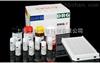 小鼠核因子κB亚基p65亲和肽(NF-κB p65)ELISA试剂盒kit