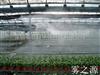 广东珠海 珠海蔬菜大棚喷雾降温